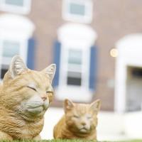 プリマ緑丘外観猫